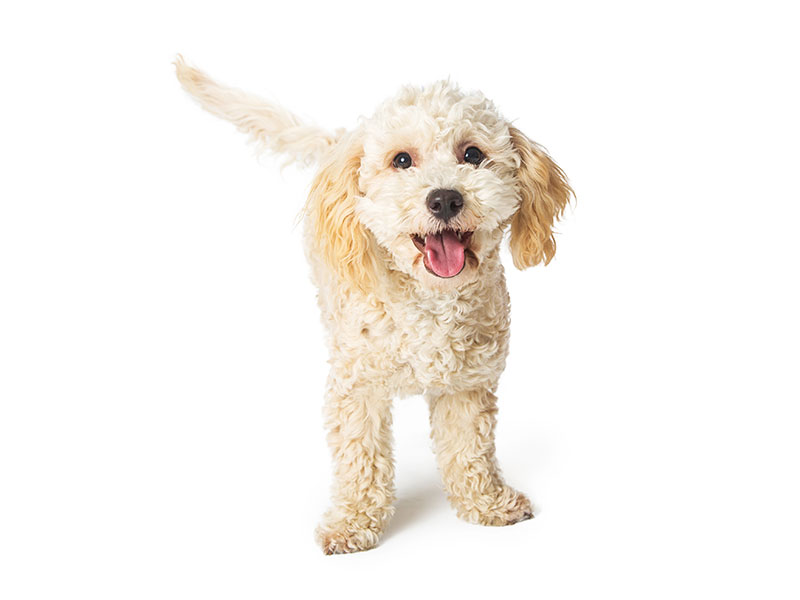 happy-dog-animal-medical-center-of-austin