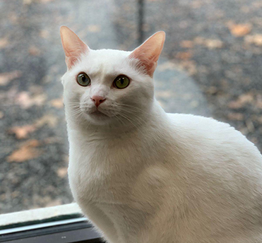 white cat on ledge