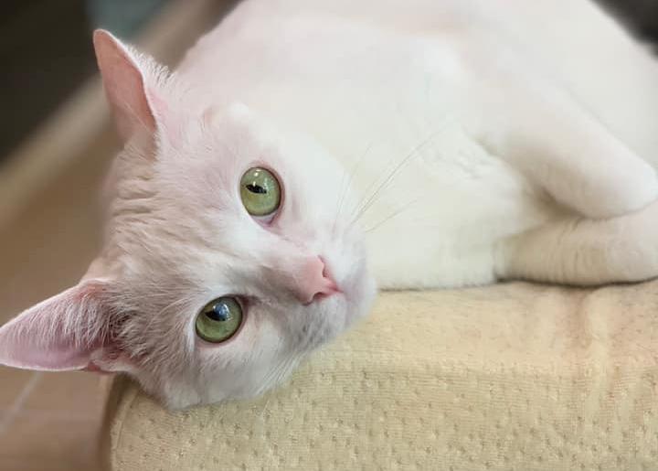 white cat on tree